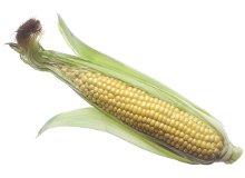 Your baby is the length of an ear of corn at 24 weeks pregnant - Pregnancy Week By Week